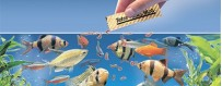 Krmivo pre ryby